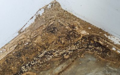 How to Prevent Termites in the Home